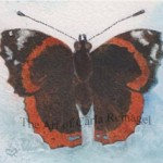 red-admiral-0712