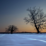burr_oak_in_snow_evening_final_version_8x10_dsc1690